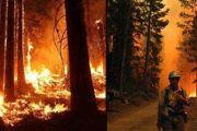 """""""Спри горските пожари – научи как"""""""